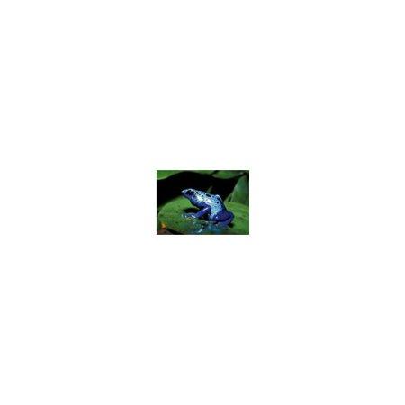 Poison Arrow Frog Card (Printable Arrows)