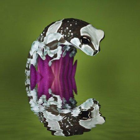 Amazon Milk Frog and Reflection Print Wall Art By Adam (Adam Milk)