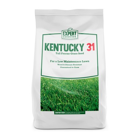 Dwarf Fescue Seed (Expert Gardener Kentucky 31 Tall Fescue Grass Seed; 20 Pounds)
