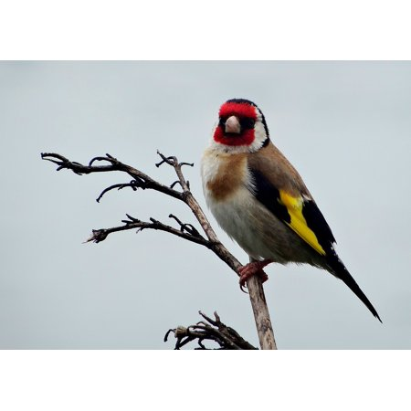canvas print close-up bird new zealand nature outdoors animal stretched canvas 10 x 14 ()