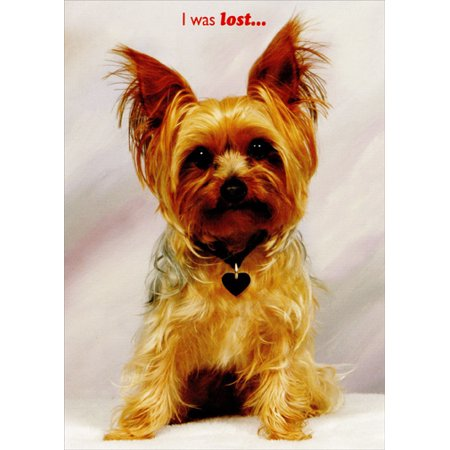 Designer Greetings Dog with Red Heart Collar: Husband Valentine's Day (Hearts Designer Dog Collar)