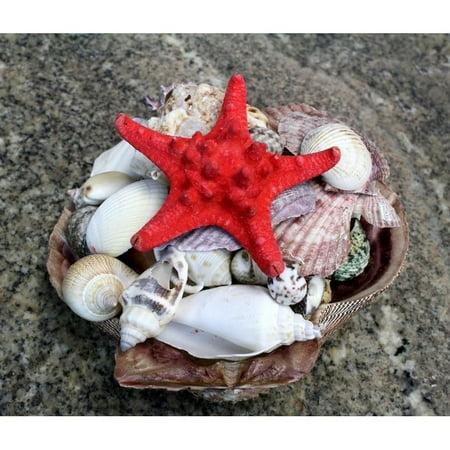 SEAICH  Lion Paw Sea Shell Pack ()