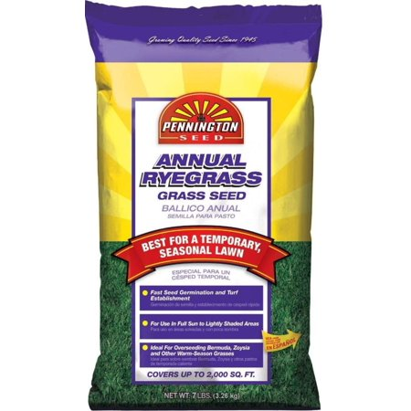 Annual Ryegrass to Overseed Warm Season Grasses, 7 lb, Pennington Annual Ryegrass 7lb Establishes quickly and grows temporary grass By