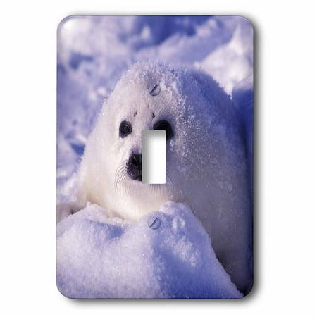 3dRose Gulf of St. Lawrence, Harp Seal pup-CN14 GJE0025 - Gavriel Jecan, 2 Plug Outlet Cover