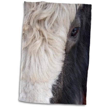 3dRose Montana, Kalispell, Yak, Spring Brook Ranch - US27 PSO0004 - Paul Souders - Towel, 15 by 22-inch - Paul Frank Towel