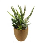 """12"""" Potted Artificial Mixed Succulents and Fern Arrangement"""