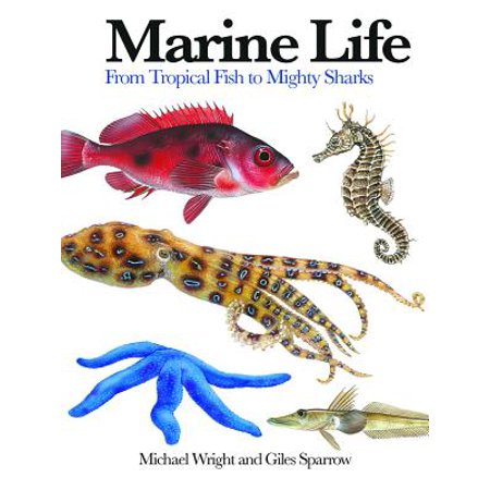 Marine Life : From Tropical Fish to Mighty Sharks (Mini Sharks For Sale)