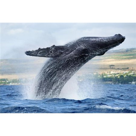 Hawaii Maui Humpback Whale Breaching with Island in The Background Poster Print, 19 x 12 - image 1 de 1