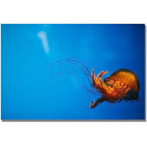 "Trademark Fine Art ""Single Jellyfish"" Canvas Wall Art by Ariane Moshayedi"