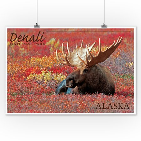 Denali Moose (Denali National Park, Alaska - Bull Moose - Lantern Press Photography (9x12 Art Print, Wall Decor Travel Poster) )