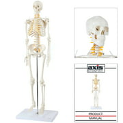 """Axis Scientific Mini Human Skeleton Model with Metal Stand, 31"""" Tall with Removable Arms and Legs, Easy to Assemble, Includes Product Manual for Study and Reference, Worry Free 3 Year Warranty"""