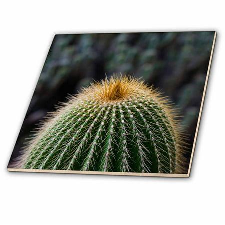 3dRose Spain, Canary Islands, La Gomera, close-up of cactus. - Ceramic Tile, 12-inch ()