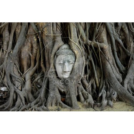 Buddha's Head is Embeded in Tree Roots, A Beautiful Ancient Site in Ayutthaya as A World Heritage S Print Wall Art By Flying (16 Most Beautiful Trees In The World)