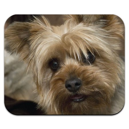 Yorkshire Terrier Yorkie Dog Mouse Pad Dog Round Mouse Pad