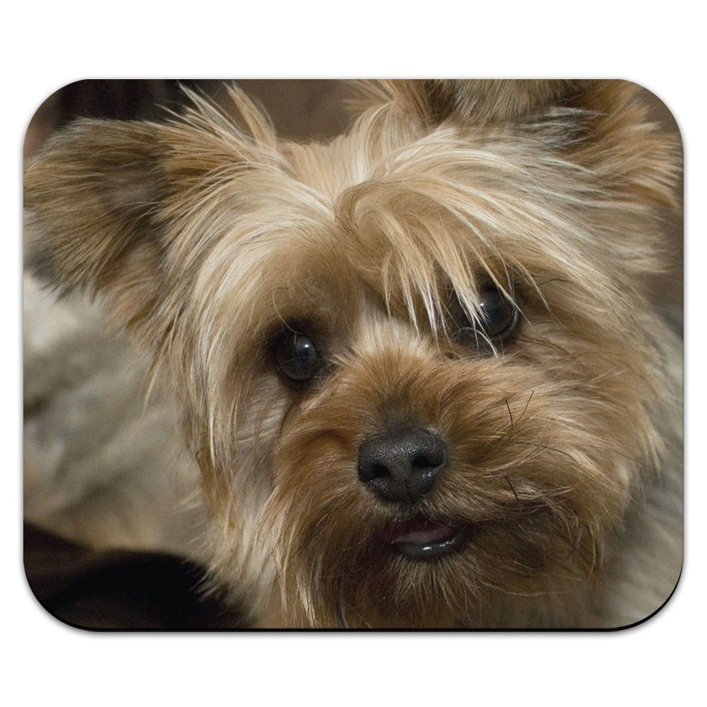 Yorkshire Terrier Yorkie Dog Mouse Pad