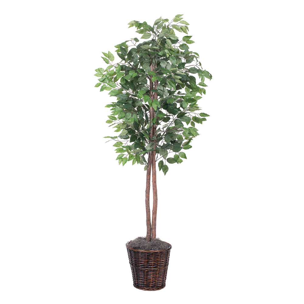 Vickerman 6' Artificial Ficus Tree in Brown Rattan Basket