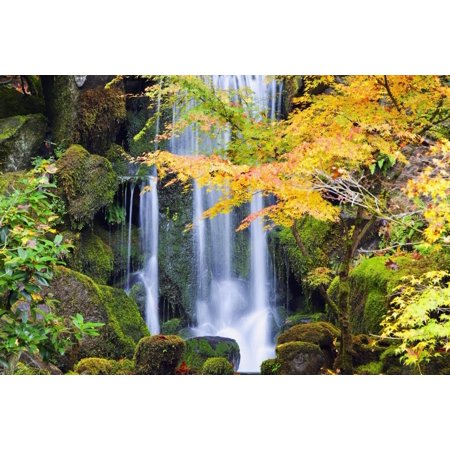 Waterfall 12' Lip (Portland Oregon United States Of America A Waterfall In A Japanese Garden In Autumn Stretched Canvas - Craig Tuttle  Design Pics (19 x 12))