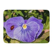 GODPOK Black Shell Harlequin Ladybird Lady Bug Resting on Purple Pansy Flower with Green Foliage Red Beetle Rug Doormat Bath Mat 23.6x15.7 inch