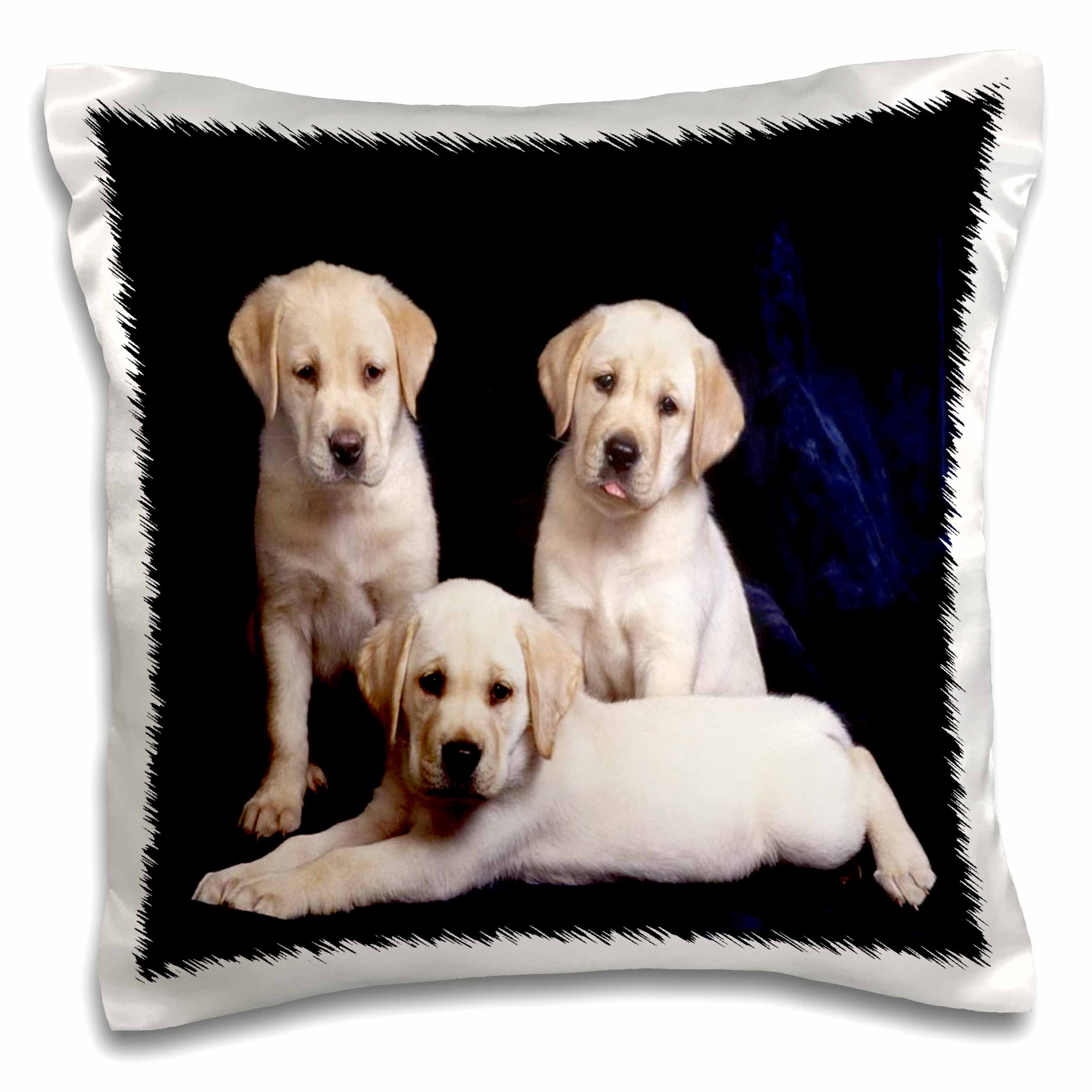 3dRose 3 Yellow Labs Portrait, Pillow Case, 16 by 16-inch