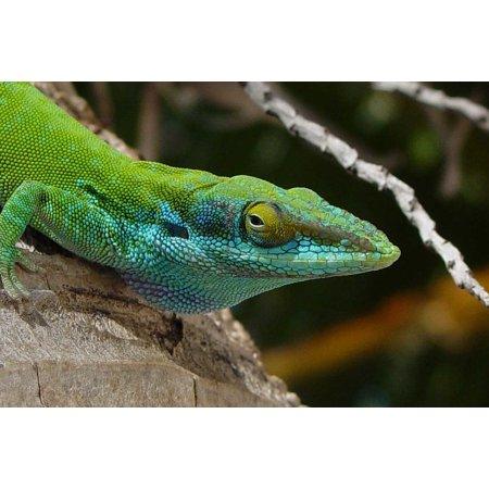 - Canvas Print Desert Reptile Tropical Wood Lizard Macro Head Stretched Canvas 10 x 14