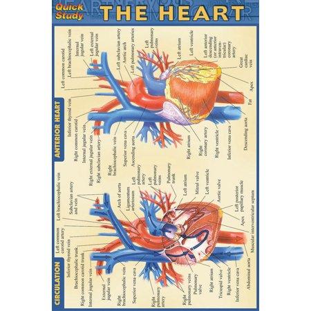 Thy Heart - Heart