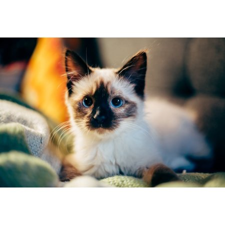 LAMINATED POSTER Blur Kitten Pet Animal Cat Poster Print 24 x 36