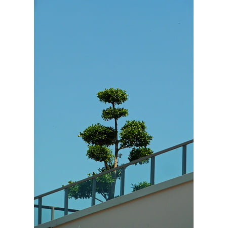 LAMINATED POSTER Roof Terrace Terrace House Roof Live Recover Poster Print 24 x 36 ()