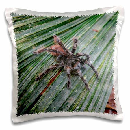 3dRose Amazon jungle, on a trail from the Maranon River, pink toe tarantula. - Pillow Case, 16 by