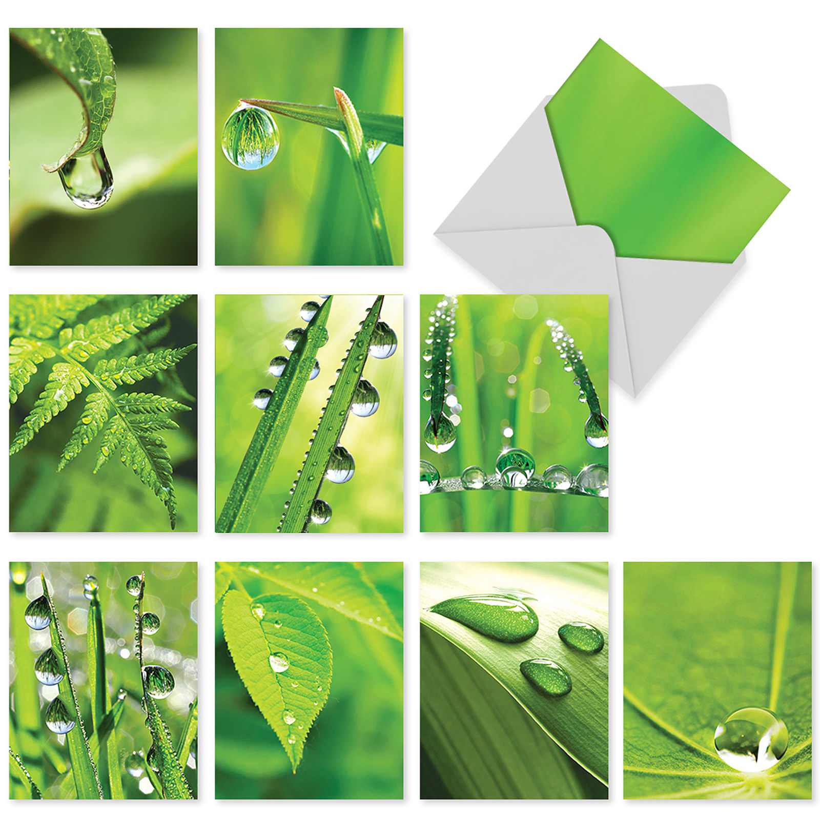 'M3015 M3015 Just Dew It' 10 Assorted Thank You Greeting Cards Feature Dew Drops on Leafy Greens with Envelopes by The Best Card Company