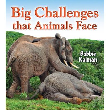 Big Challenges That Animals Face (Animal Faces)