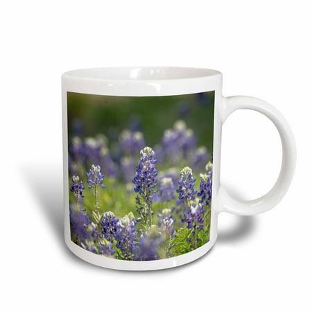 3dRose Texas bluebonnets, Austin, Texas, Ceramic Mug, 11-ounce](Halloween Stores Austin Texas)