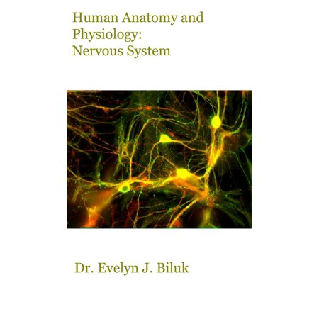 Human Anatomy and Physiology: Nervous System -
