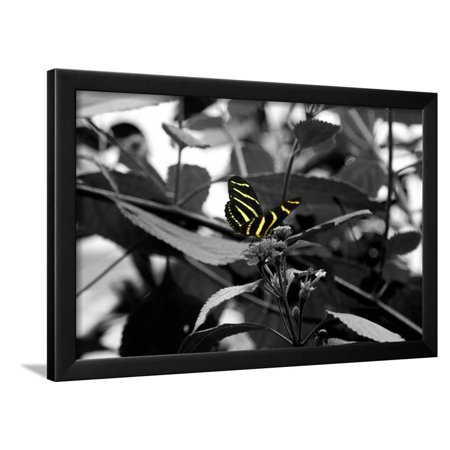 Butterfly at Bronx Zoo Framed Print Wall Art