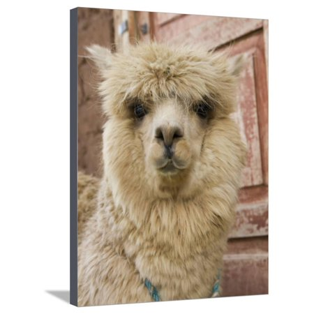 Llama, Cuzco, Peru Stretched Canvas Print Wall Art By John & Lisa Merrill