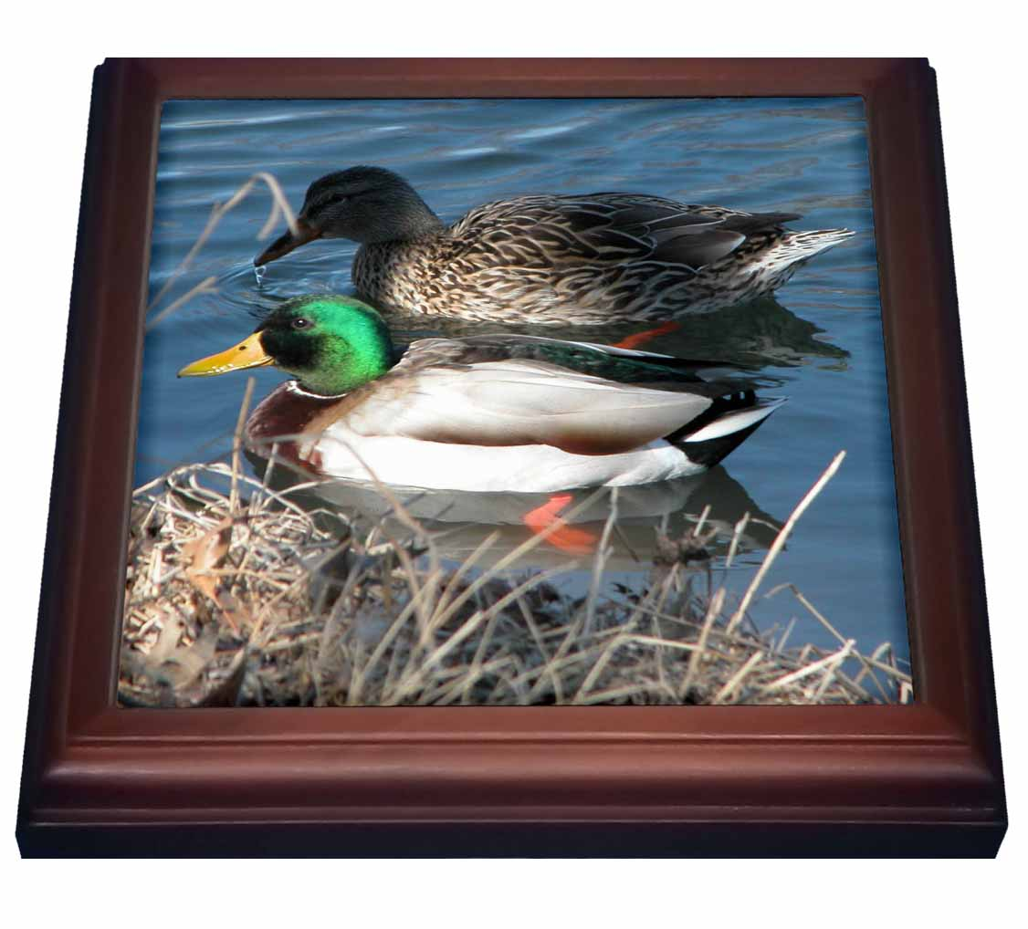 3dRose Mallard Duck Couple, Trivet with Ceramic Tile, 8 by 8-inch by 3dRose