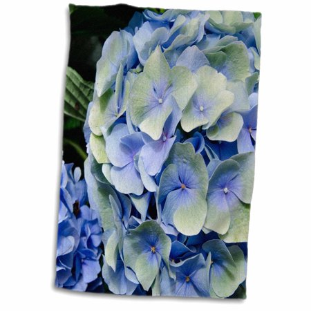 3dRose USA, Alabama, Theodore. Bellingrath Gardens and Home, hydrangea flower - Towel, 15 by 22-inch
