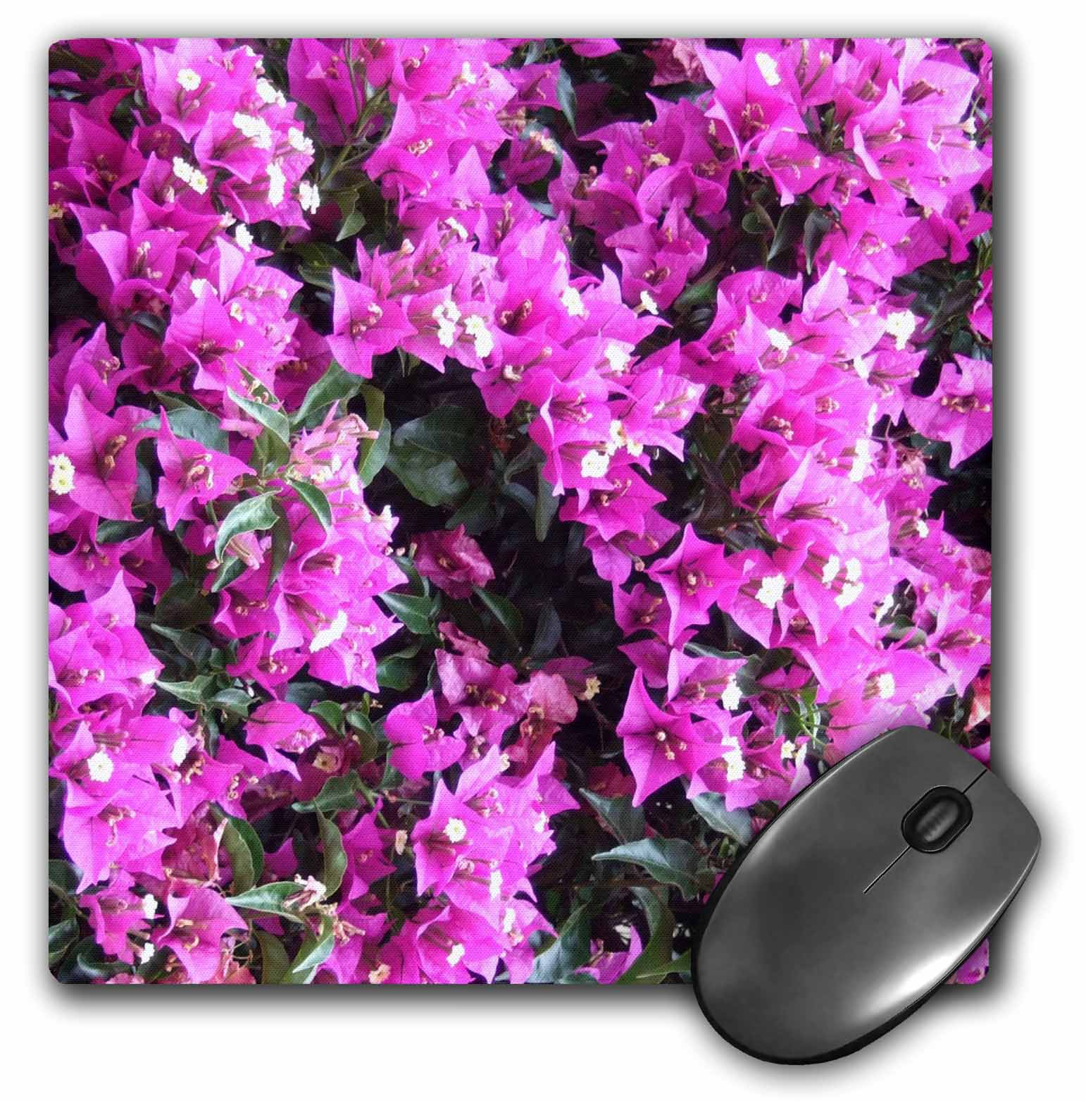 3dRose Magenta pink Bougainvillea flowers bright purple climbing floral plant, Mouse Pad, 8 by 8 inches