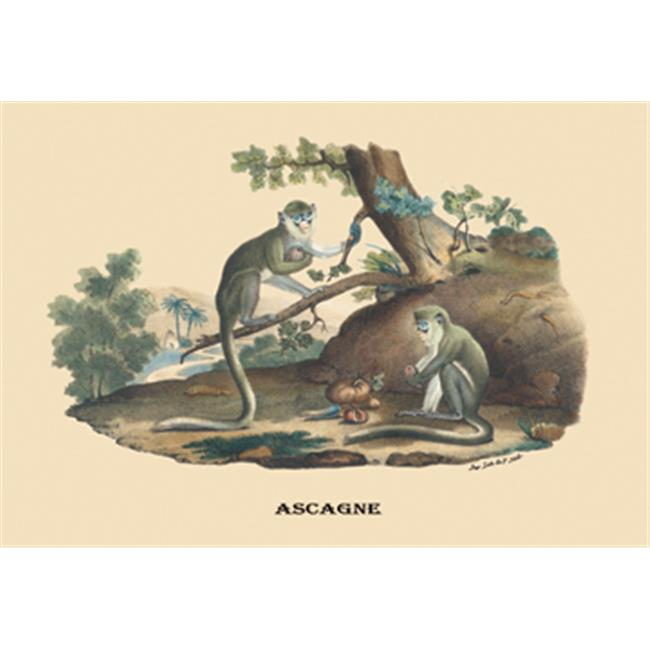 Buy Enlarge 0-587-08899-0C12X18 Singes - Monkeys- Canvas Size C12X18