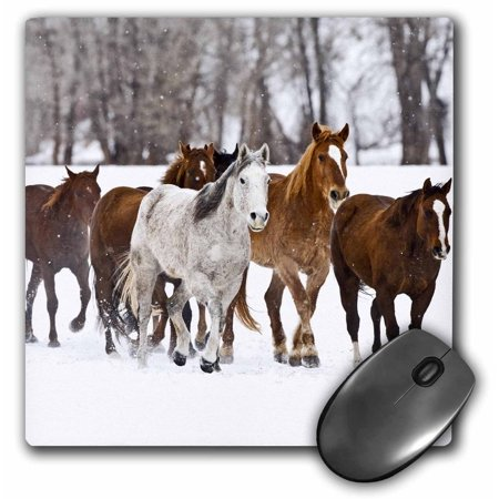 3dRose Running horses on Hideout Ranch, Shell, Wyoming - US51 JRE0031 - Joe Restuccia III, Mouse Pad, 8 by 8 inches