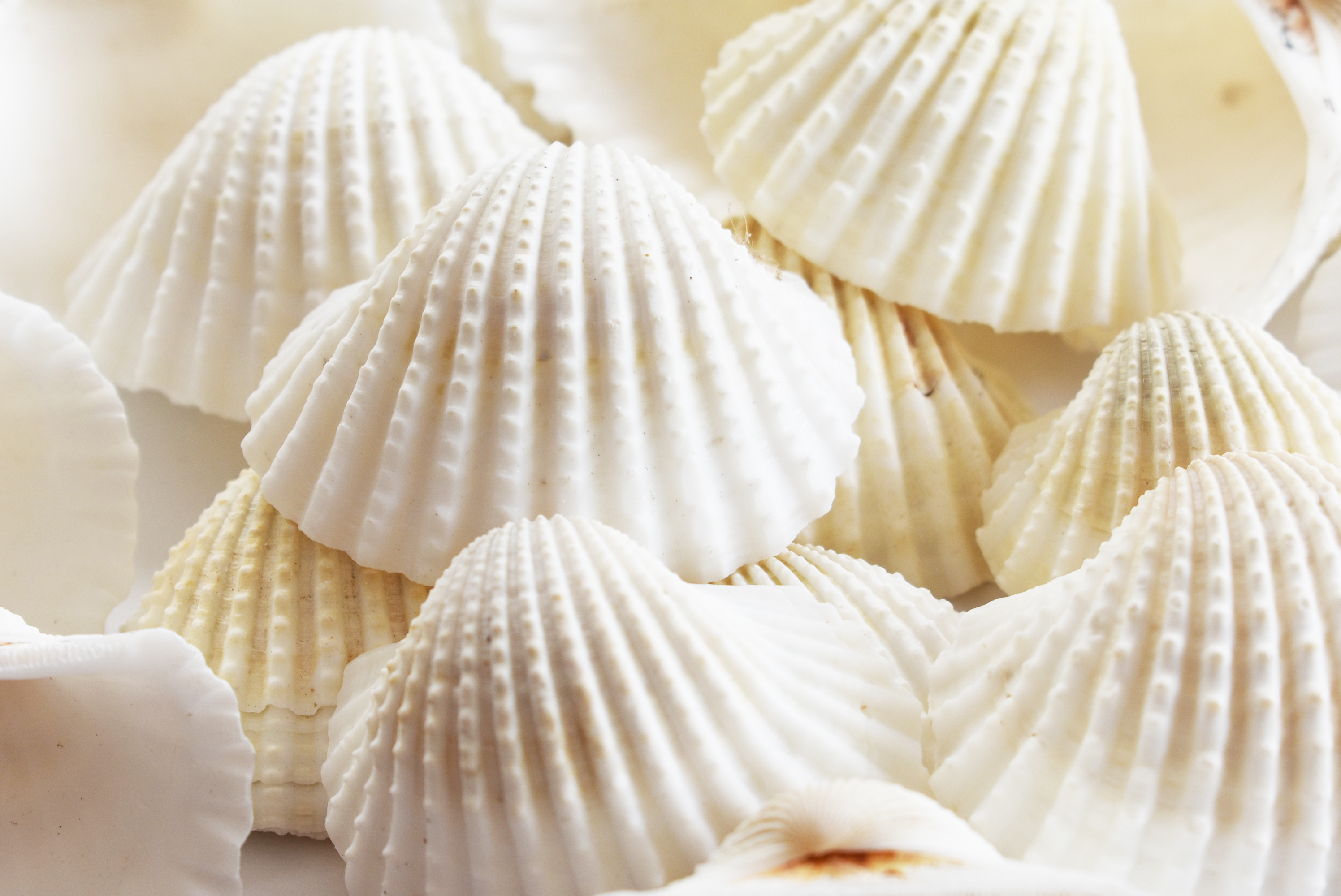 24 pcs WHITE Mini Sea Shells Mermaid Party Favor Holders For Wedding Party SALE