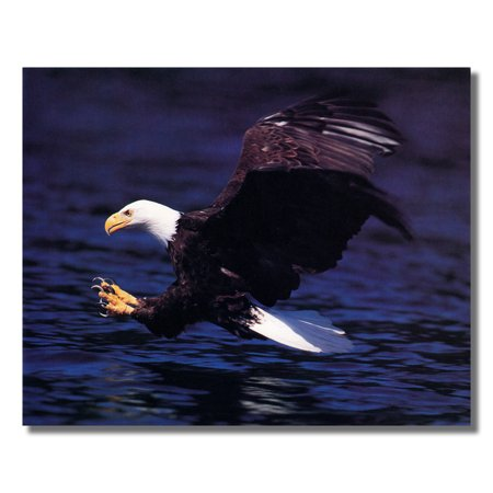 American Bald Eagle Claws Wildlife Wall Picture Art (Eagle Art Print)