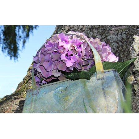 LAMINATED POSTER Blue Summer Blossom Purple Bloom Flower Hydrangea Poster Print 24 x