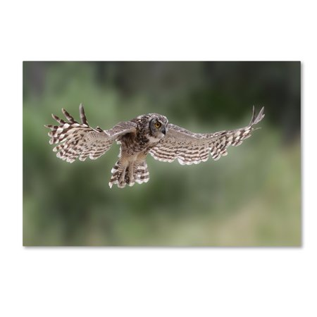 Trademark Fine Art 'Owl' Canvas Art by Andre Marais (Fine Art Oil)