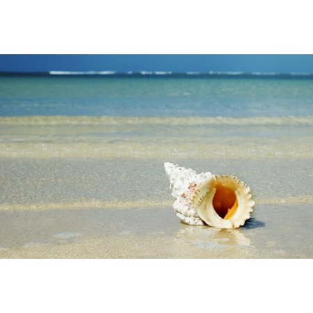 Tropical Seashell On The Beach With Gorgeous Clear Blue Ocean Behind Posterprint