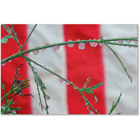 "Trademark Fine Art ""Patriotic Puddles"" Canvas Art by Steve Wall"