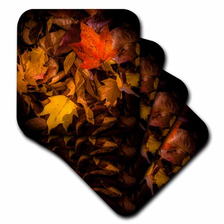 3dRose Fall Leaves on Forest Floor, Soft Coasters, set of 4 by
