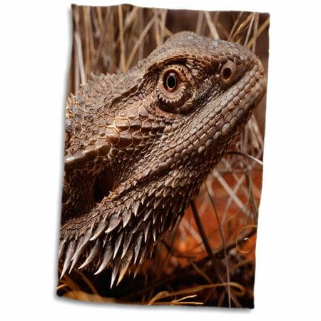 3dRose Australia, Central Bearded Dragon lizard, outback-AU01 PSO0064 - Paul Souders - Towel, 15 by 22-inch - Paul Frank Towel