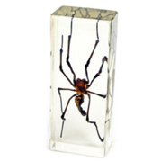 Ed Speldy East PW311 Large Paperweight - Golden Orb Spider