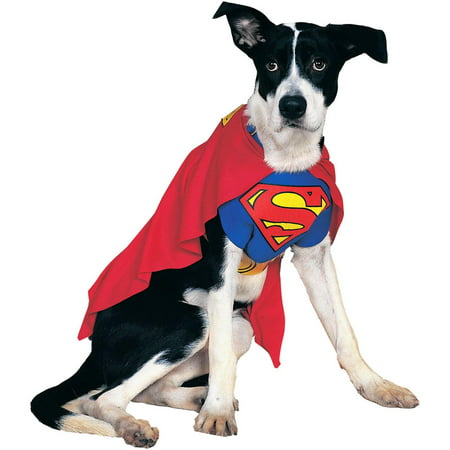 Homemade Pet Halloween Costumes (Superman Pet Halloween)