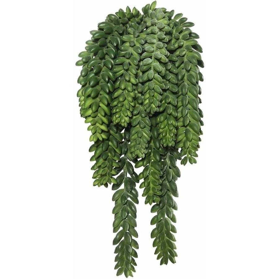 """Vickerman 13"""" Plastic Artificial Green Donkey's Tail Bush Featuring 14 Tails with 1311 Beans"""